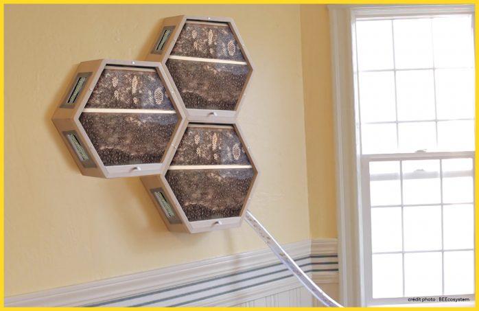 La ruche modulable de Beecosystem